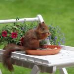 squirrel-818121_1280